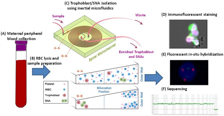 Inertial microfluidic Fetal Cells